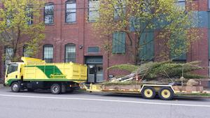 Cascadian Landscapers truck and trees