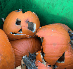 rotting pumpkins in roll cart