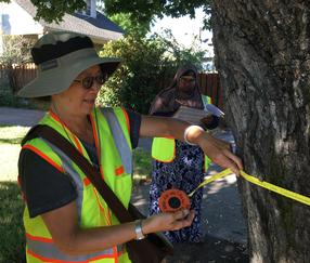 Volunteers collect data on street trees in Creston-Kenilworth
