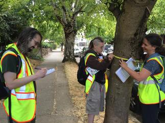 Volunteers collect data on street trees in Irvington