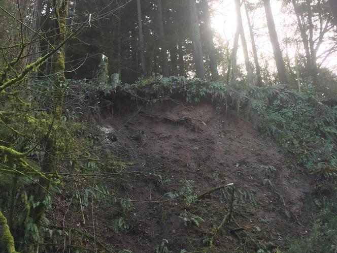 Landslide stripped soil undercutting trees