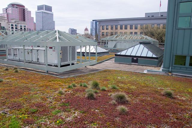 Central Library green roof