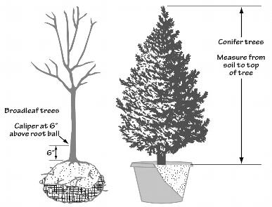 Figure 80-3 Measuring Tree Size for New Trees