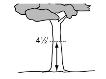 Figure 80-4 Measuring Tree Size for Existing Trees