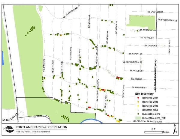 Dutch Elm Disease Update | Urban Forestry Blog | The City of