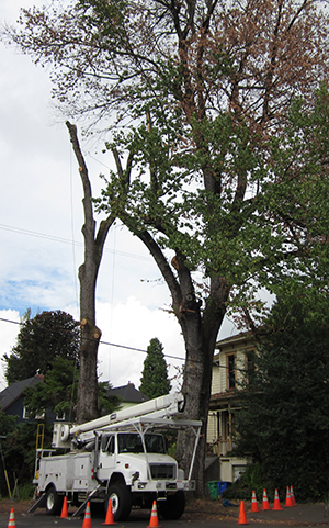 Elm Removal photo