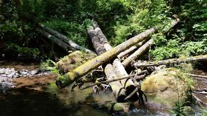 Logjam in stream