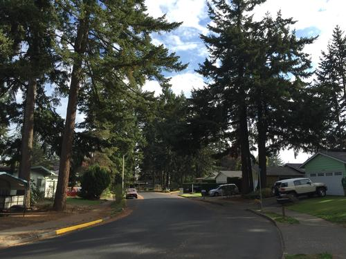 Trees shading a Portland neighborhood street