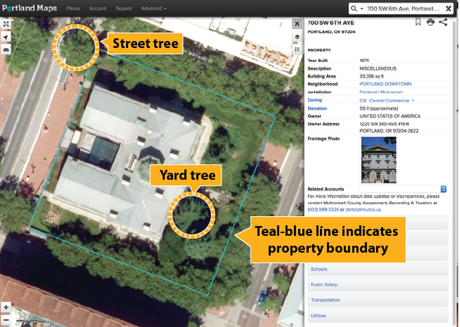 Graphic showing property line, yard tree and street tree