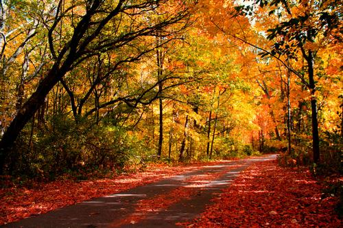A sun dappled road through a forest in autumn. Red leaves cover the ground middle part of the road . Let's make our way through the forest of disability rights laws  and show a clear path forward for all! Image from flickr.com