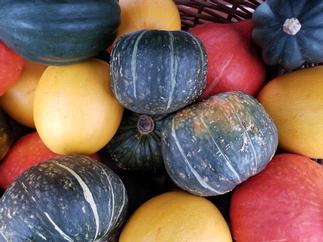 photo of squash