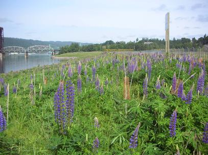 willamette river and wildflowers