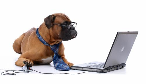 a light brown bulldog, wearing glasses and a tie, sits in front of a computer. A mouse is under their right paw.