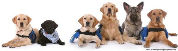*six dogs of a variety of breeds, some of them wearing vests, looking straight at us. They urge us to learn about the critical roles of service animals and emotional support animals. Image from assistancedogs.wordpress.com*