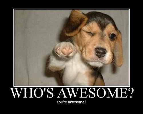 Text reads: Who's awesome? You're awesome! Photo of a puppy winking at us, one paw outstretched towards us. We are awesomely prepared for this tip! From whoseawesome.com