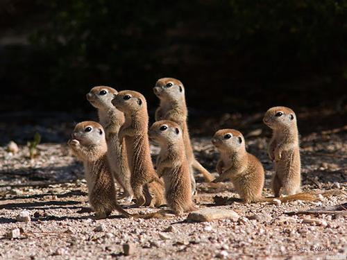 And we don't have to do it alone. Like these baby prarie dogs all facing the same direction, we can move towards digital access together. Skydancingblog.com