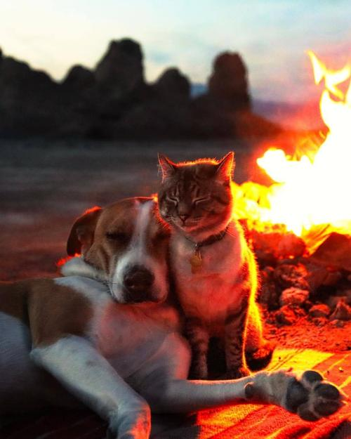 A cat and a dog snuggle, eyes closed, in front of a campfire at dusk. In the background, we can see the outline of rocks and a body of water.  Pinterest.com.