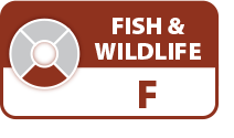Fanno Creek Fish and Wildlife Score: F