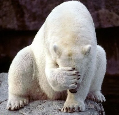 You're not shy like this polar bear hiding their face behind their paw, are you? Pinterest.com