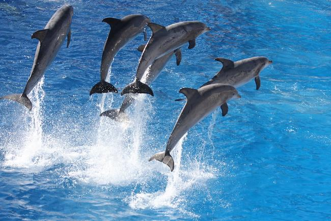 Let's dive in together! Like this photo of six bottlenose dolphins mid-jump, it'll be fun! Flickr.com