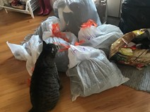 Cat interested in bags of coats