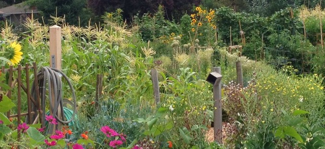 Image result for portland johns community garden