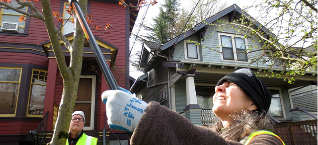 Tree permits the city of portland oregon permits are needed for pruning street trees spiritdancerdesigns Gallery